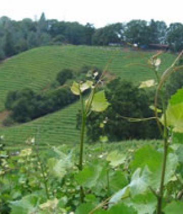 Weber Creek Winery