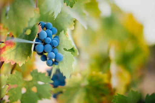 Cielo Estate Winery