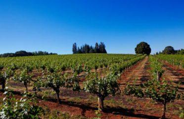 Madroña Vineyards