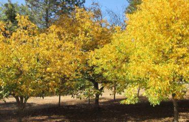 Perry Creek Walnuts